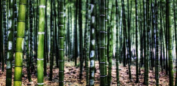 Bamboo - Jakob Montrasio