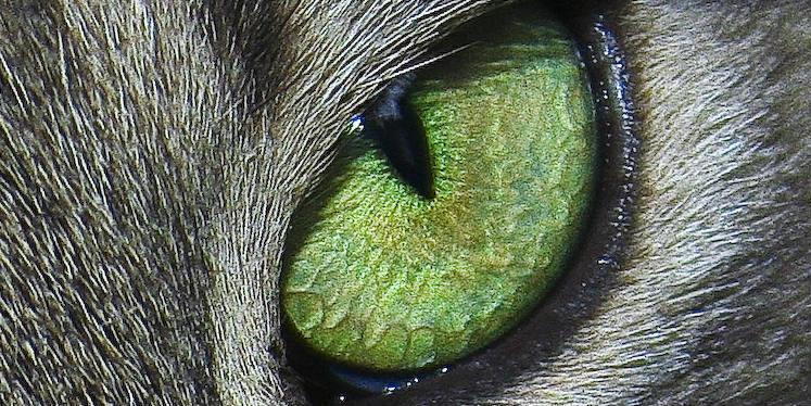 Cats eye - banner