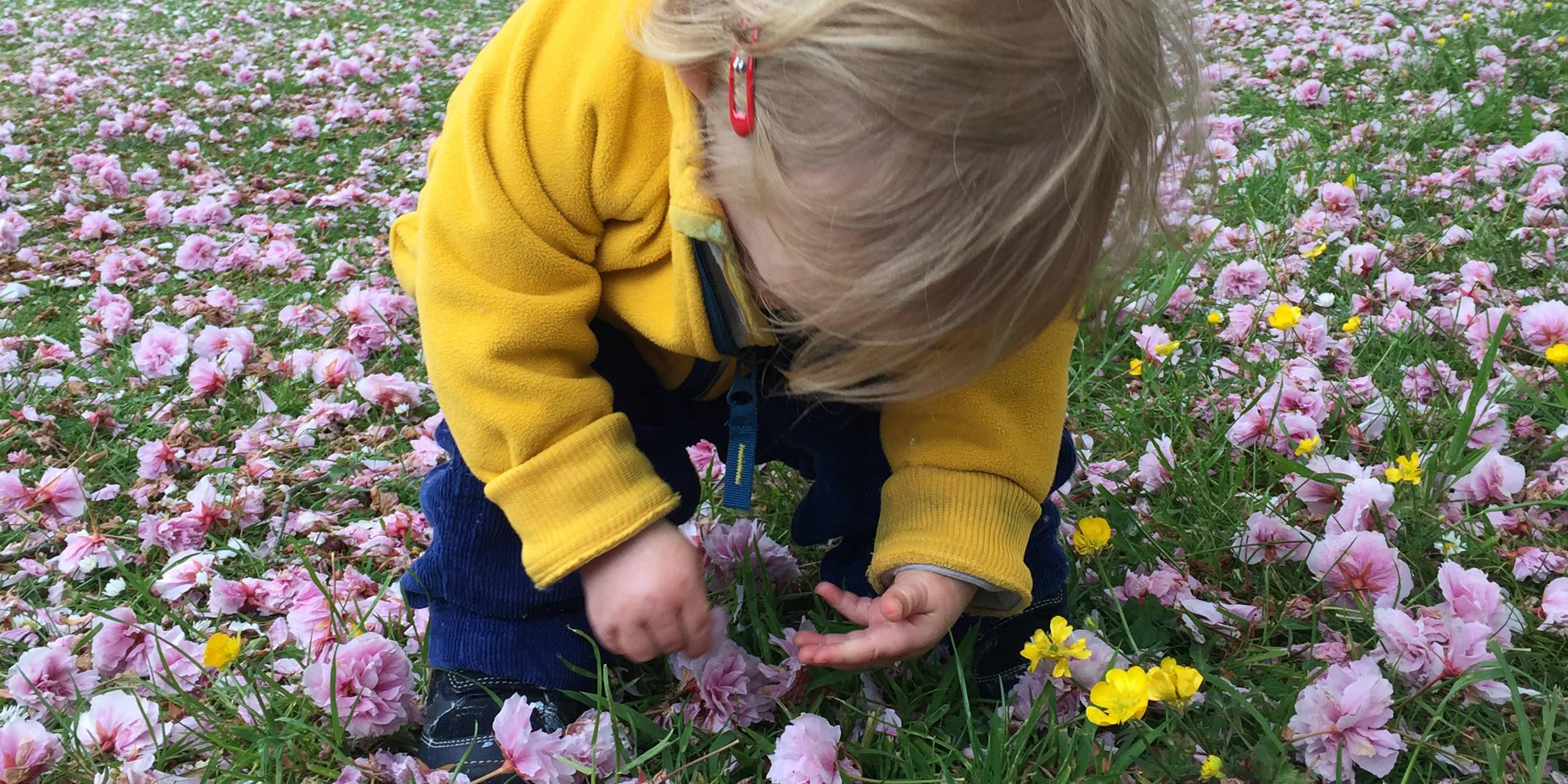 Daisy - botanic gardens - BANNER