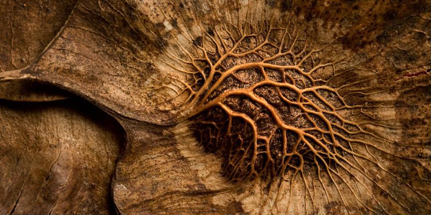 Kalyan Varma - Redwood seed - BANNER