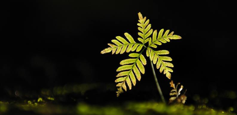 Kalyan Varma - new life fern seedling - banner