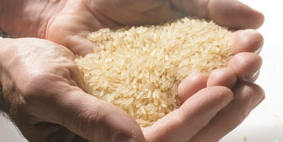 Rice - food security - time wheeler - BANNER